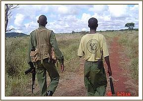 Desnaring team meber on patrol with a KWS Ranger