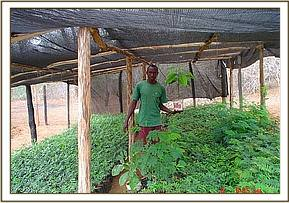 The David Sheldrick Wildlife Trust tree nursery