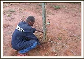 Repair of the fence post that the buffalo damaged