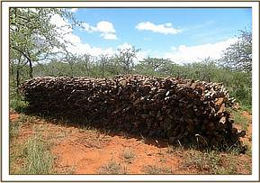 Pile of logged wood at Taita ranch