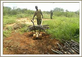 Illegal logging at Taita ranch