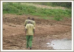 Ithumba team tracing footprints near a waterhole