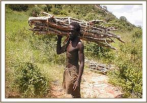 Carrying firewood to make charcoal