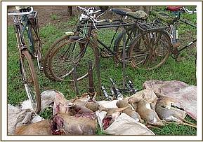 Lamped antelopes & confiscated tools & bicyles
