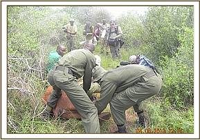 Rescuing an elephant baby at Tundani