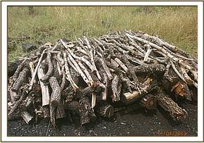 Logs prepared for making charcoal