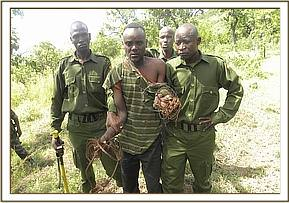 bushmeat poacher arrested at mbondeni area