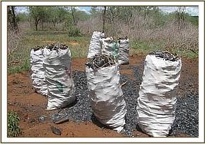 Illegal charcoal manufacture on Ranches