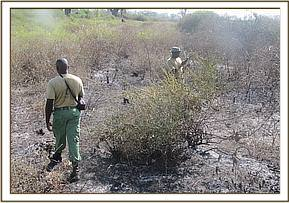 A burnt section of the Kibwezi Forest