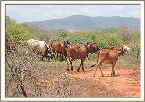 Illegal Grazing