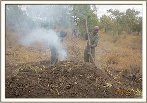 A fresh charcoal kiln at Mangelete area