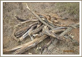 A pile of wood found at Mangelete area