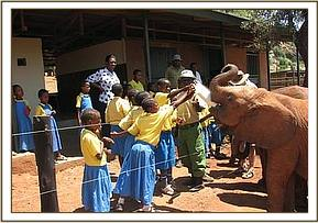 Kajire pupils meet the elephant orphans at Voi