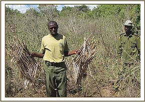 Game bird traps recovered in Metava