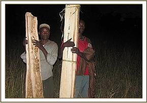 Arrested loggers