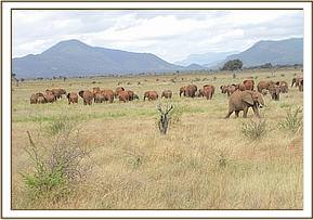 An elephant herd on the Park