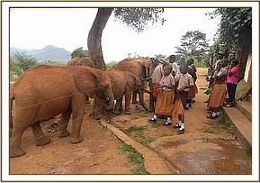 The students visit the elephant orphans