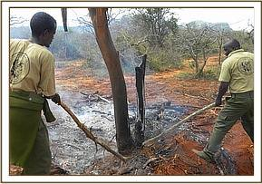 Removing a snares that killed the elephants