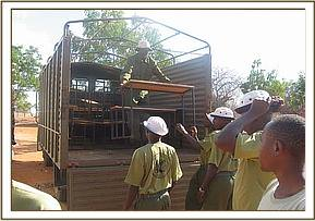The desks arrive at Kamunyu primary school