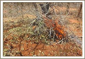 Destroying a charcoal kiln at Kishushe ranch