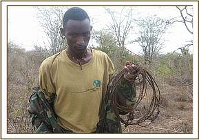 A team member with lifted snares