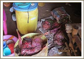 Confiscated bushmeat and poachers wares