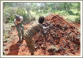 Destroying an illegal charcoal kiln at Kishushe