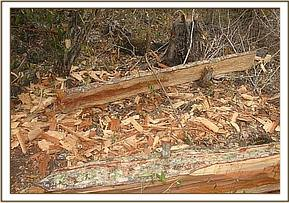 Logged wood