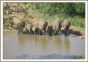 Wild elephants seen on the trip