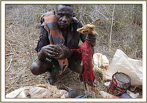 Poacher caught with a freshly skinned Dikdik