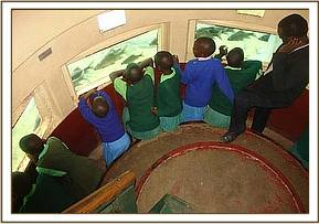 Kitheini primary students viewing the fish