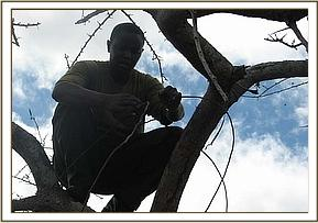removing girraffe snare at taita-hill sanctuary