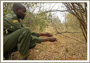 lifting small snares at kimweli area