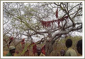 Bushmeat hung on drying lines