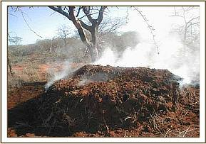 Destruction of vegitation at Ndara ranch