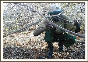 A Burra team member removes a snare
