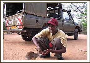 A young Dikdik rescues by the team