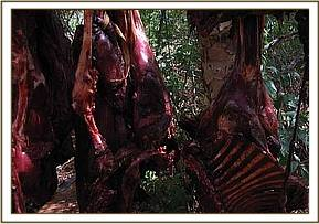 Recovered bushmeat