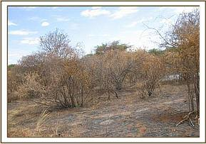 Bush fires set by poachers