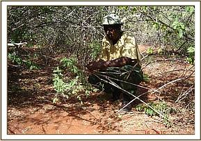 A member of the desnaring team removes a snare