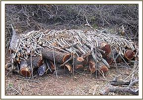 Wood pile for charcoal burning