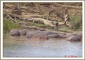 Hippos seen during the field trip