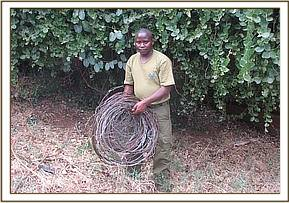 A desnaring team member with some lifted snares