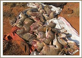 Some of the game meat found with the poacher