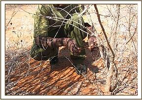 removing snares at Mbulia ranch