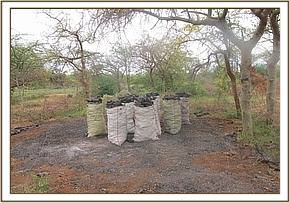 Charcoal burning in the reserve