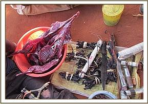 Fresh and dried bushmeat with hunting apparatus