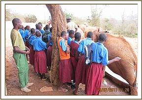 Sowa pupils visit the elephant stockades