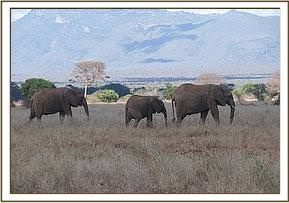 A herd of elephants seen during the trip
