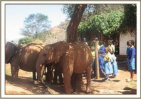 kajire pupils meeting the elephant orphans